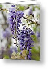 Draping Lavender Purple Wisteria Vines Greeting Card
