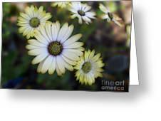 Dream Daisy Greeting Card
