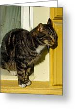 Dreaming Cat Greeting Card