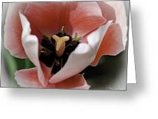 Dreaming In Pink Tulips Greeting Card
