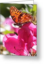 Dreaming Of Butterflies And Pink Flowers Greeting Card