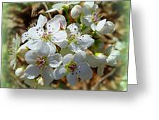 Dreams Of Pear Blossoms Greeting Card