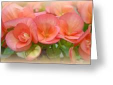 Dreamy Begonias Greeting Card