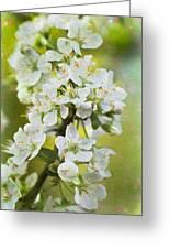 Dreamy Blossom. Greeting Card