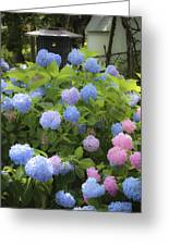 Dreamy Blue And Pink Hydrangeas Greeting Card