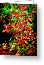 Dreamy Fall Leaves Greeting Card