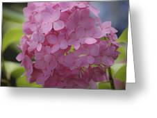 Dreamy Pink Mophead Hydrangea Squared Greeting Card