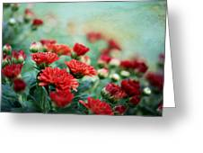 Dreamy Red Mums Greeting Card