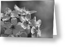 Dreamy Spring Blossoms In Black And White Greeting Card