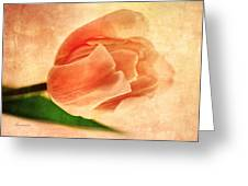 Dreamy Vintage Tulip Greeting Card