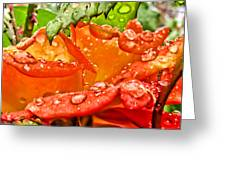 Drenched II Greeting Card