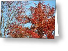 Dressed For Autumn Greeting Card