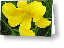 Dressed In Yellow Greeting Card