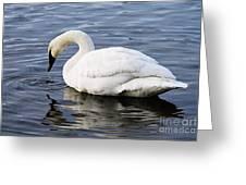 Dribbling Swan Greeting Card