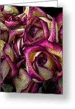 Dried Pink And White Roses Greeting Card