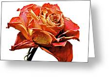 Dried Rose Greeting Card
