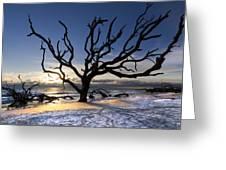 Driftwood Beach At Dawn Greeting Card
