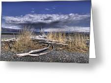 Driftwood By The Sea Greeting Card
