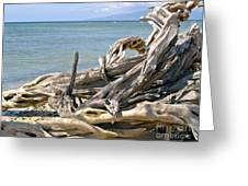 Driftwood II Greeting Card