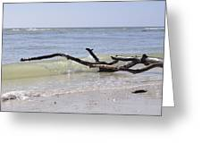 Driftwood In The Surf Greeting Card