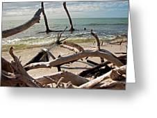Driftwood Jungle I Greeting Card