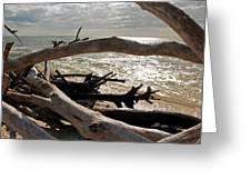 Driftwood Jungle II Greeting Card