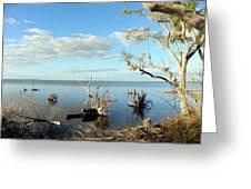 Driftwood Landscape 1 Greeting Card