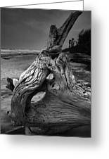 Driftwood On Beach Greeting Card by Steven Ainsworth