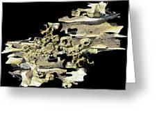 Driftwood Study 4 Greeting Card