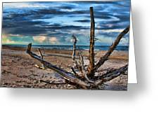 Driftwood V2 Greeting Card