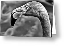 Dripping Flamingo - Bw Greeting Card