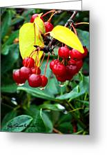 Drips And Berries Greeting Card