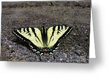 Driveway Butterfly Greeting Card