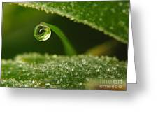 Drop Eye Greeting Card