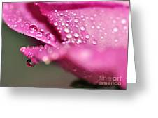 Droplet On Rose Petal Greeting Card