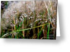Droplets On Grass Greeting Card