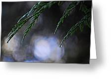 Drops In The Forest Greeting Card