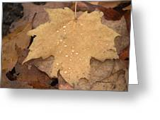 Drops On A Golden Leaf  Greeting Card