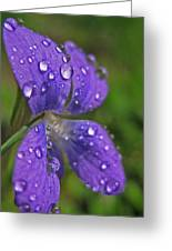 Drops On The Purple Flower Greeting Card