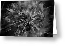 Drunk Dandelion  Greeting Card