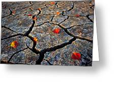 Dry Autumn Greeting Card by Mike Norton