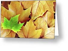 Dry Fall Leaves Greeting Card by Carlos Caetano