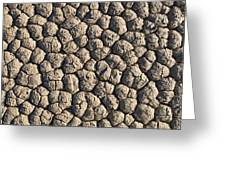 Dry Mud Patterns On The Racetrack Greeting Card