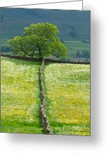Dry Stone Wall And Lone Tree Greeting Card