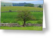 Dry Stone Wall And Twisted Tree Greeting Card