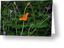 Dryas Iulia  Butterfly Greeting Card