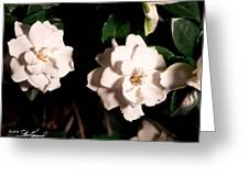 Dual Gardenias Greeting Card