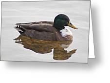 Duck 3 Greeting Card