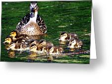 Duck And Ducklings Greeting Card