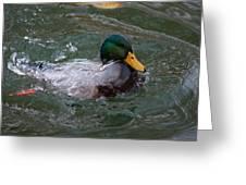 Duck Bathing Series 1 Greeting Card